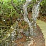 El camino de tablas impide que se pisotee el suelo del bosque.