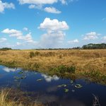 Okaloacoochee Slough State Forest