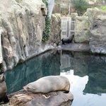 Grace, Tuna and Karel the fur seals