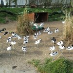Waders section