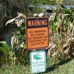 Everglades!