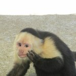 capuccino monkey