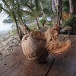 Coconut on the deck
