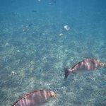 Snorkeling in Shark Bay