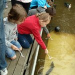 Feeding the eels