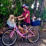 Lots of people ride around the Northern Beaches, dogs too!