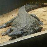 парк крокодилов