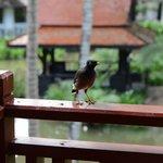 Птички на балконе