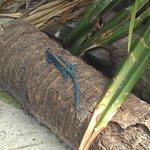 All kind of iguanas