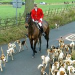 Hounds at exercise Boxing Day