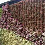 Vertical Garden - lovely colours and variety.