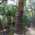 Coconut plantation and path leading to the beach