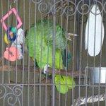 The resident bird