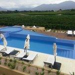Pool overlooking vineyards