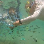 Fish Feeding Activity available - off the resort beach