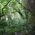 Ugandan nature