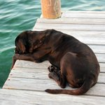 Bowser the island dog