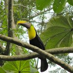 ...and toucans!