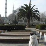 Вид на Голубую мечеть с площади