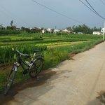 Vegetable gardens near Hoi An