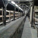 De barakken van Auschwitz