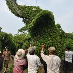 Moving a topiary elephant to a new home for the lunar new year