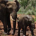 Elephants at the watering hole near the lodge and rooms.
