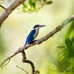 Sungei Buloh Wetland Reserve Foto