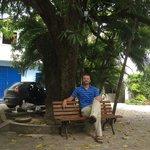 Platz unter 100 Jahre altem Mangobaum