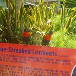 Colorful Birds at Coral World