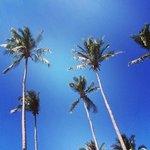 palme coco lanta