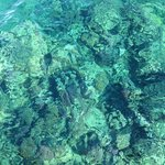 Corals and house reef - crystal clear waters