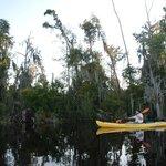 Cypress-Tupelo Swamp