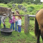 The kids got to feed the horses.