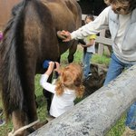 The kids got to brush a horse.