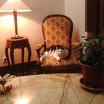 Accueil du chat dans le hall d'entrée