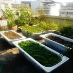 organic garden on the roof