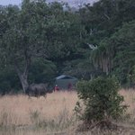 Rhino next to the tents