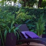 Garden & pool área