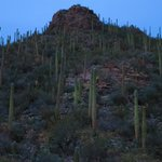 Ventana Canyon Trail