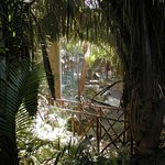 Tropical Gardens Throughout
