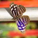 Vlindertuin