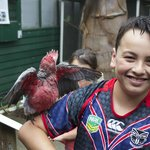 My son with his favorite bird, a super friendly hand-reared Galah
