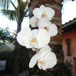 Orquídeas do Jardim