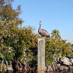 Sentinel of Clam Bayou.