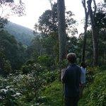 Jungle jaunt through premises