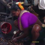 Cashew sorting - Cashew factory