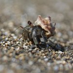 Tiny hermit crab on the hotel beach