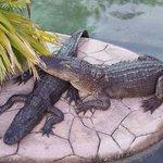 Alligator pond at Kissimmee Go Karts