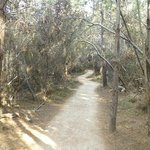 Walking path (wheelchair accessible) to Whaler's Cove